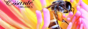 Why BEE Products?